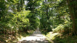 【画像】戸隠神社の道