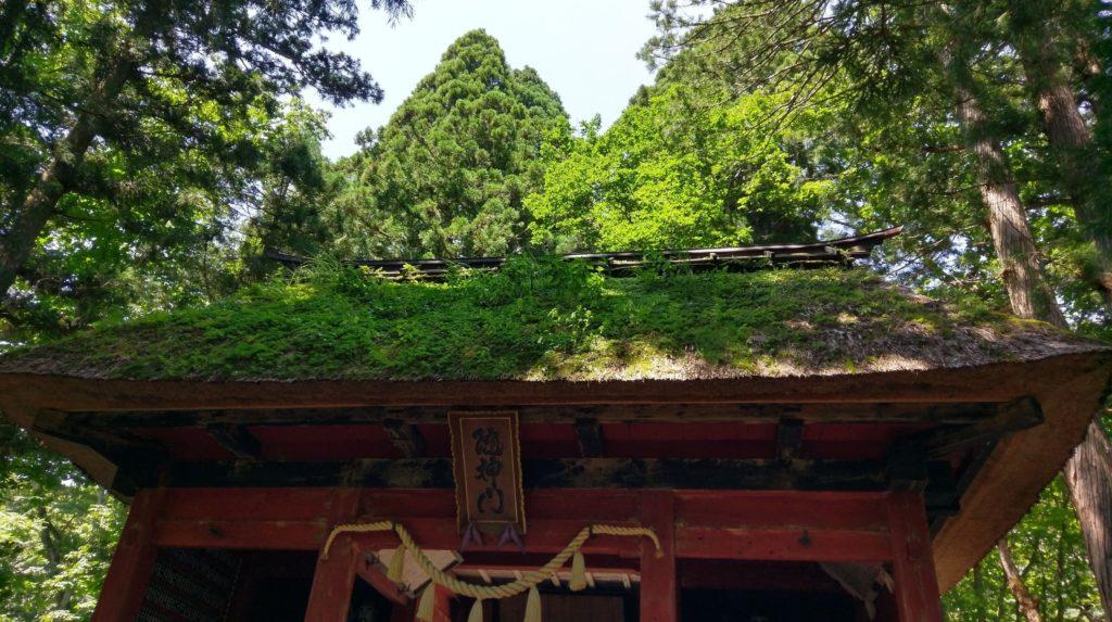 【画像】戸隠神社の風情ある建物のコケ。長野帰省
