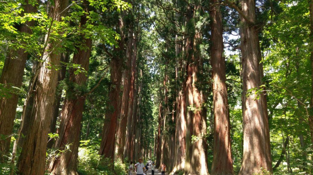 【画像】戸隠神社の風情ある杉の木長野帰省記